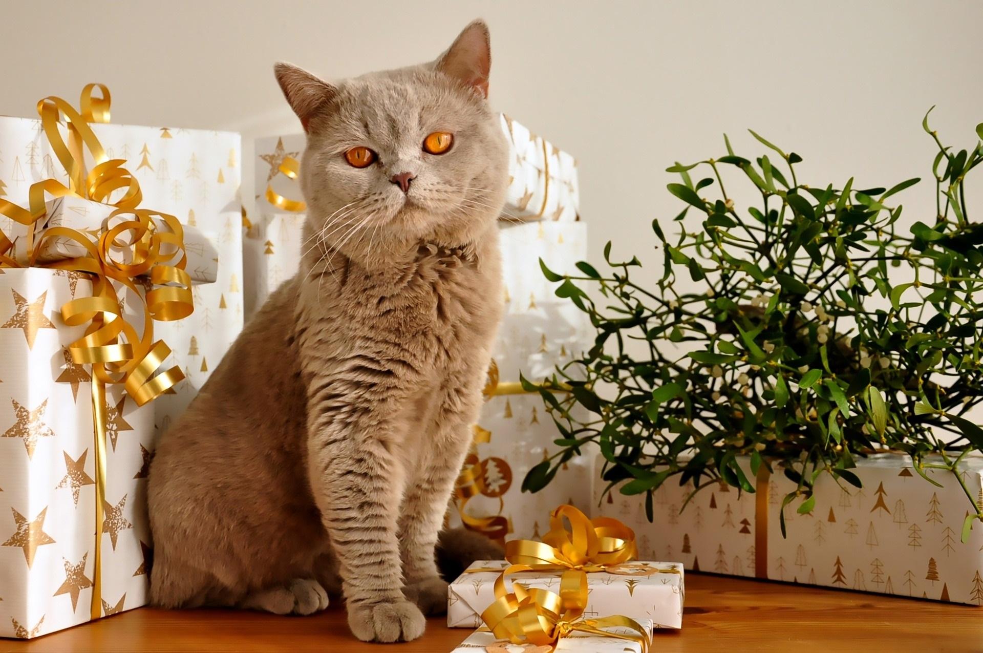 paczki mikołajkowe, noworoczne szybko, na ostanią chwilę